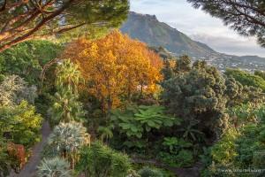 Giardini La Mortella di Forio d'Ischia - Apertura straordinaria in Inverno