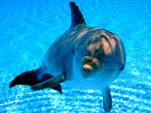 Eventi 2011 - La Festa del Delfino