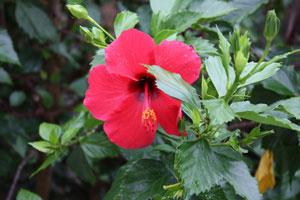 Flora e Fauna dell'isola d'Ischia