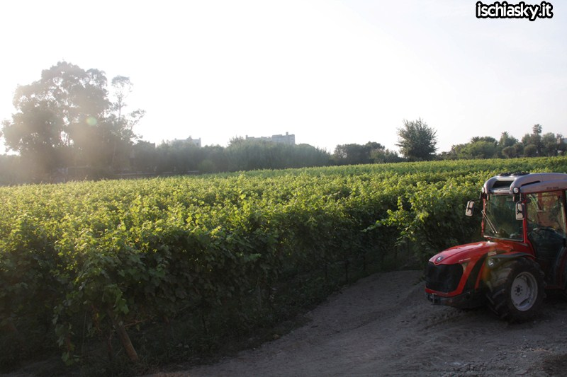 Andar Per Cantine 2011
