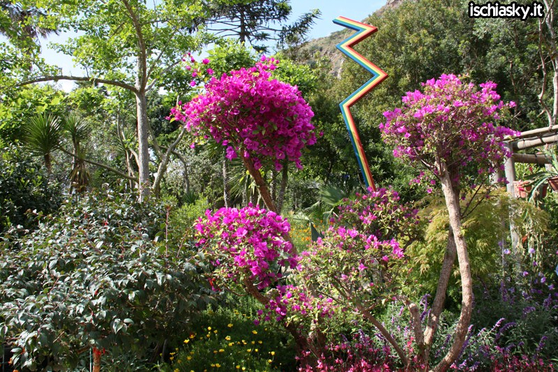 Ipomea del Negombo 2010