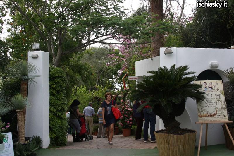 Ipomea del Negombo 2011