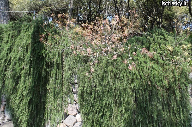 I Giardini La Mortella a Forio d'Ischia