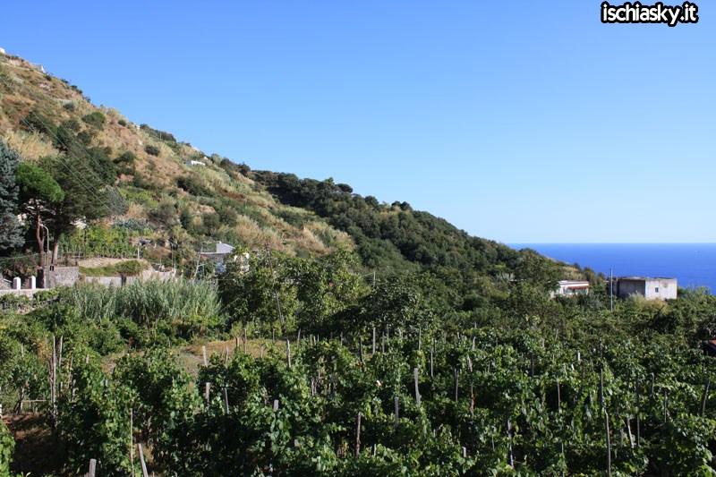 Panorami Serrara Fontana
