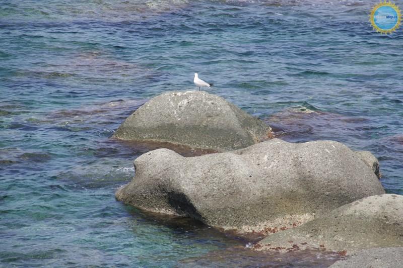 Spiagge, Mare e Coste dell'isola d'Ischia