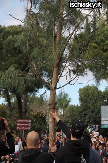 Un albero per l'Europa