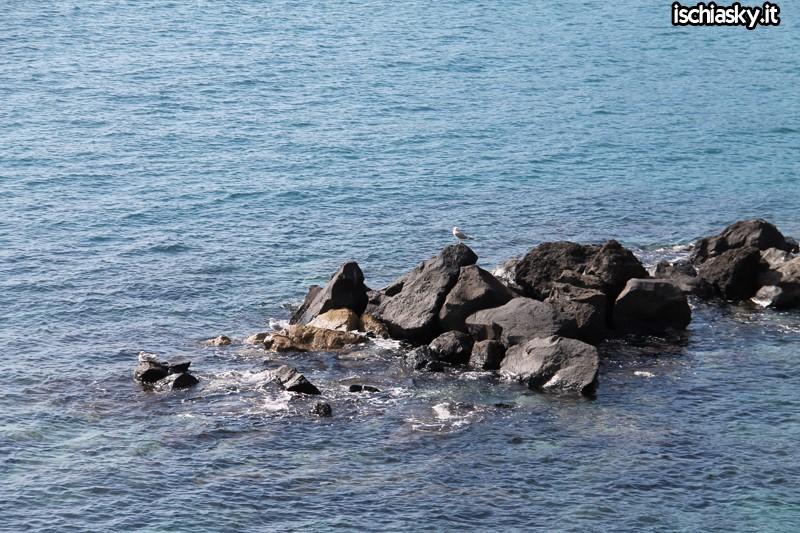 Viva il Mare 2015