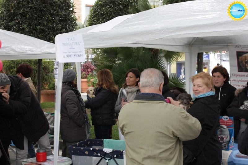 Volontari in Festa a Casamicciola